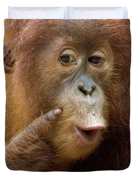 Sumatran Orangutan Baby Calling Duvet Cover by Suzi Eszterhas