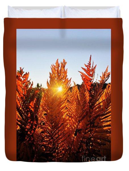 Sun Shining Through Fern Duvet Cover by Dan Friend