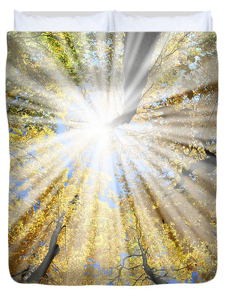 Sunrays In The Forest Duvet Cover by Elena Elisseeva