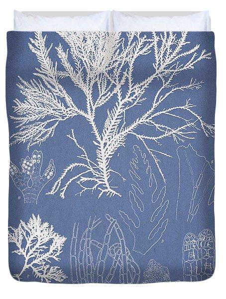 Symphocladia Gracilis  Duvet Cover by Aged Pixel