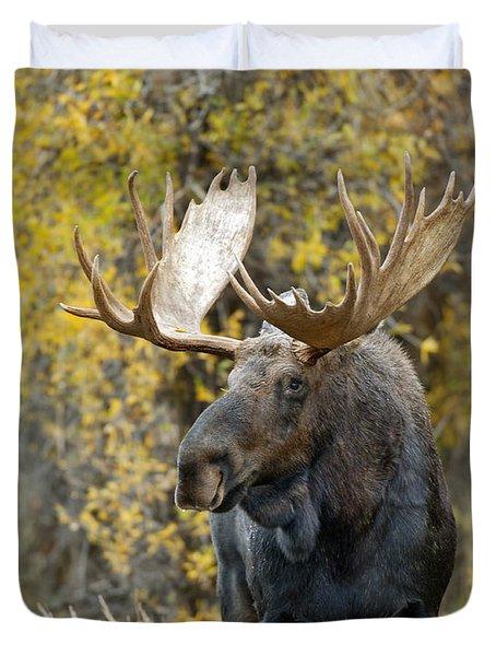 Teton Bull Moose Duvet Cover by Gary Langley