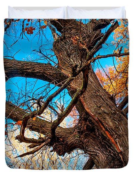 Texture Of The Bark. Old Oak Tree Duvet Cover by Jenny Rainbow