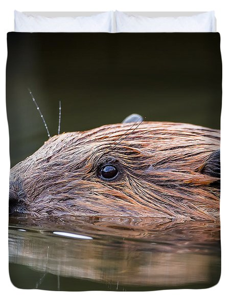 The Beaver Square Duvet Cover by Bill Wakeley