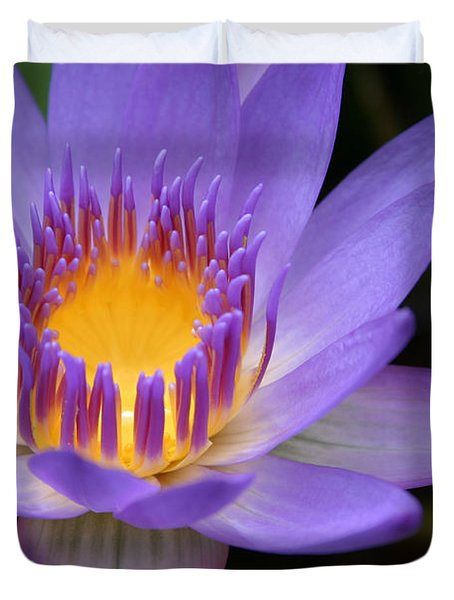 The Lotus Flower - Tropical Flowers Of Hawaii - Nymphaea Stellata Duvet Cover by Sharon Mau