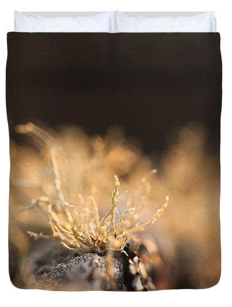 The Miniature World Of Lichen Duvet Cover by Anne Gilbert