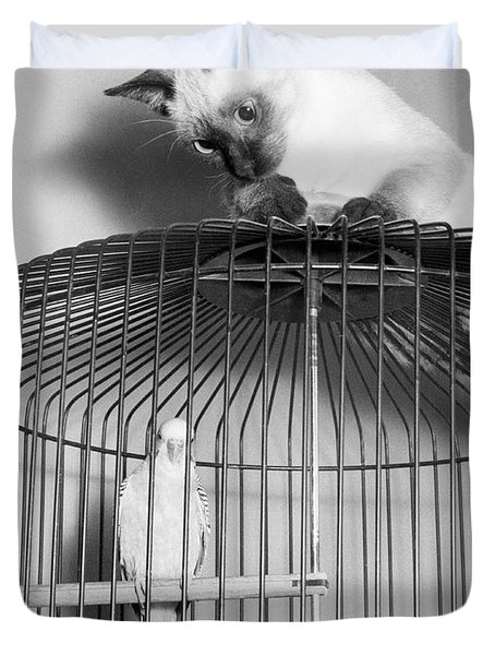 The Parakeet And The Cat Duvet Cover by Underwood Archives