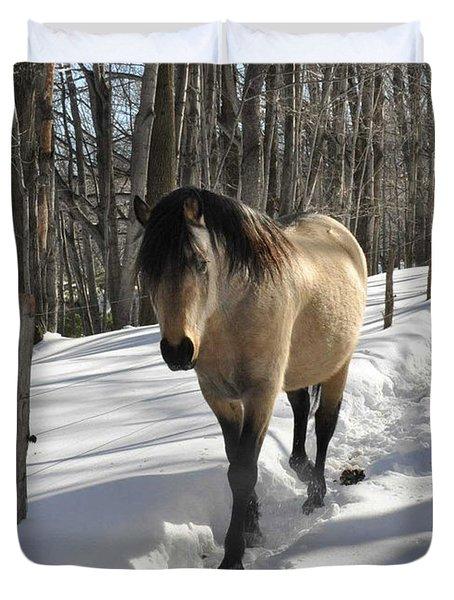 The Paso Fino Stallion Named Brio Duvet Cover by Patricia Keller