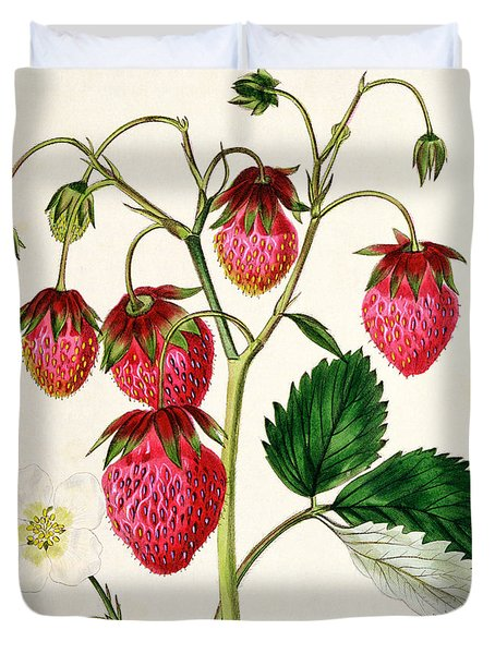 The Roseberry Strawberry Duvet Cover by Edwin Dalton Smith