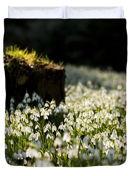 The Stump And The Snowdrops Duvet Cover by Anne Gilbert
