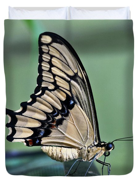 Thoas Swallowtail Butterfly Duvet Cover by Heiko Koehrer-Wagner