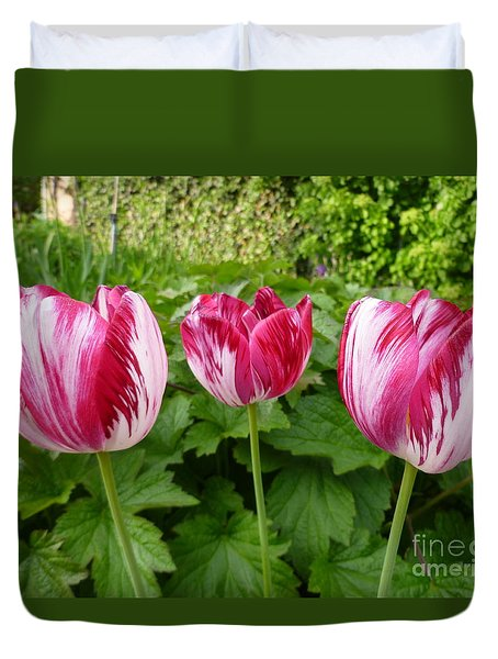 Three Pink Rembrandt Tulips Duvet Cover by Lingfai Leung