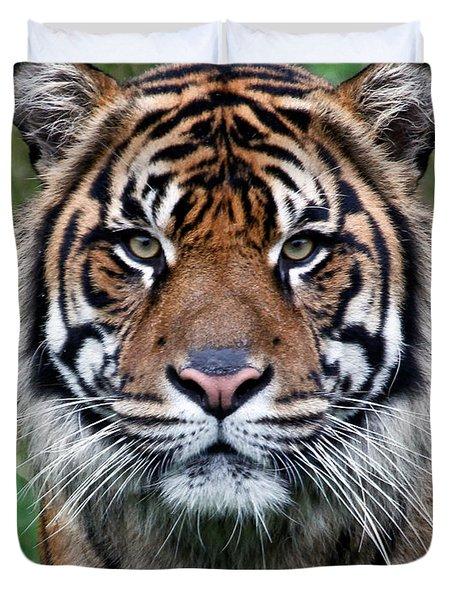 Tiger Duvet Cover by Athena Mckinzie