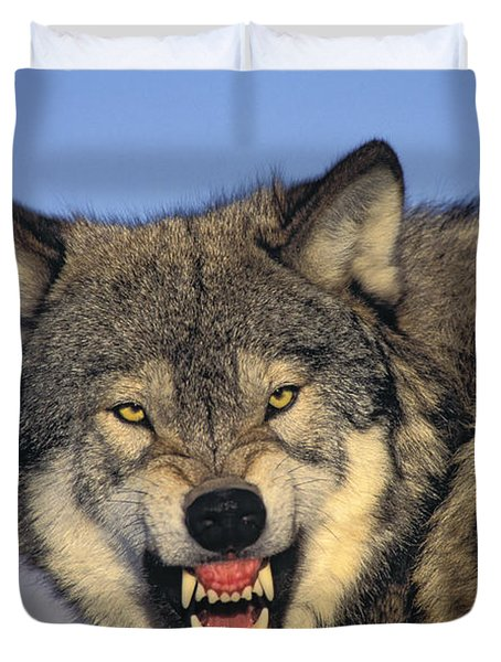 T.kitchin Wolf Snarling Duvet Cover by First Light