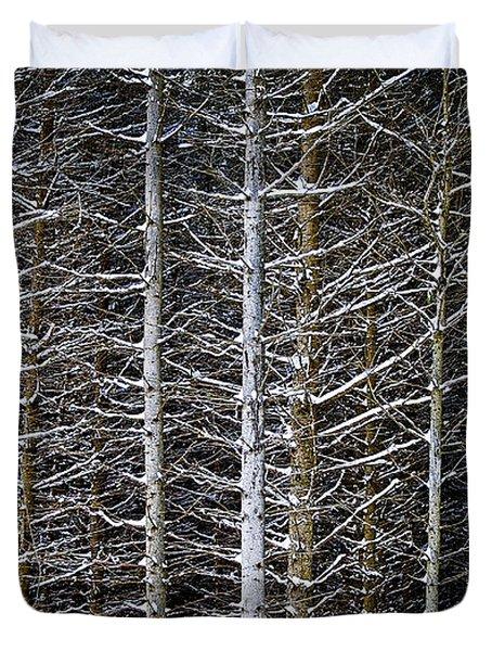 Tree Trunks In Winter Duvet Cover by Elena Elisseeva