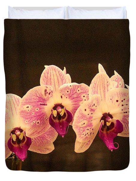 Triple Orchid Arrangement 1 Duvet Cover by Douglas Barnett