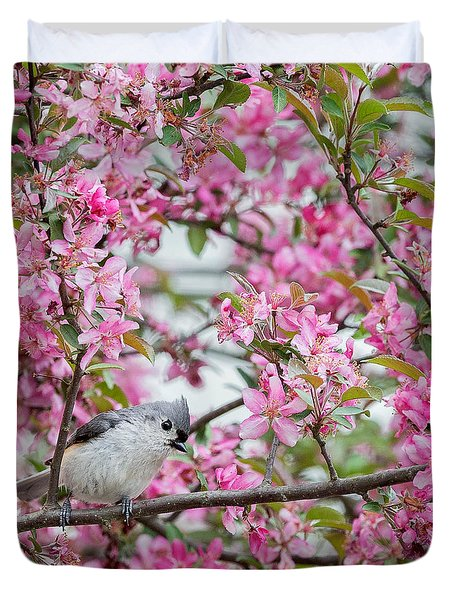 Tufted Titmouse In A Pear Tree Square Duvet Cover by Bill Wakeley