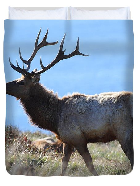 Tules Elks of Tomales Bay California - 7D21218 Duvet Cover by Wingsdomain Art and Photography