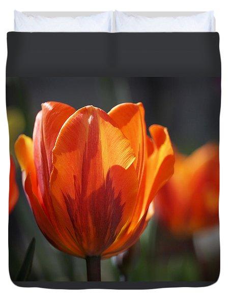 Tulip Prinses Irene Duvet Cover by Rona Black