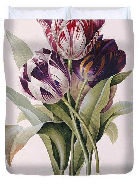 Tulips Duvet Cover by Pierre Joseph Redoute
