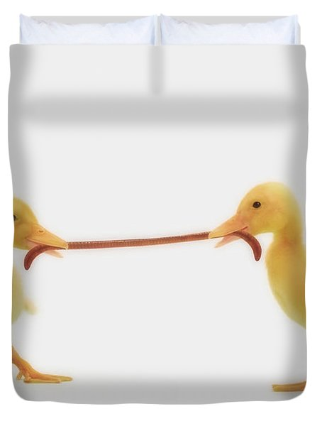 Two Baby Ducklings Fighting Duvet Cover by Thomas Kitchin & Victoria Hurst