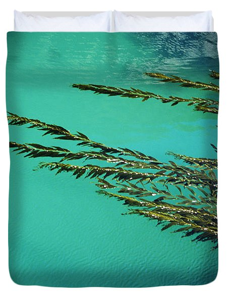 Usa, California, Seaweed Floating Duvet Cover by Larry Dale Gordon