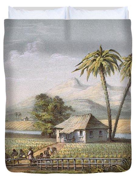 Vista De Una Vega De Tabaco, Or Duvet Cover by Spanish School