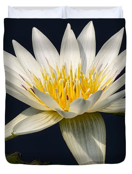 Waterlily and Pad Duvet Cover by Susan Candelario