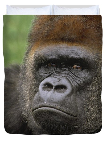 Western Lowland Gorilla Silverback Duvet Cover by Gerry Ellis