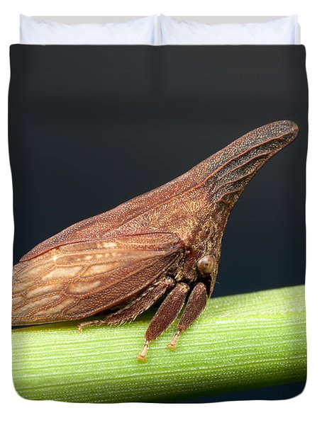 Widefooted Treehopper II Duvet Cover by Clarence Holmes