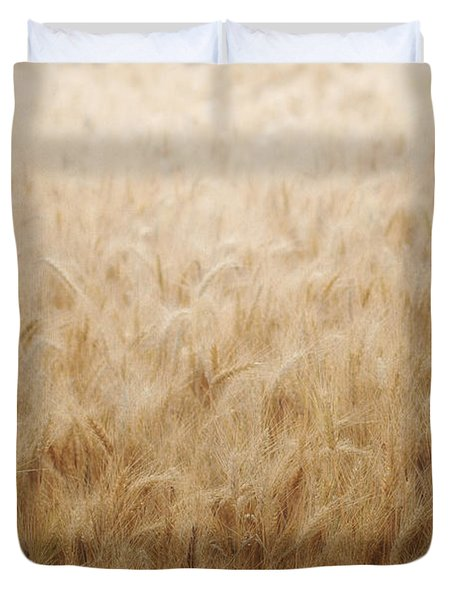Winsome Wheat Duvet Cover by Amy Tyler