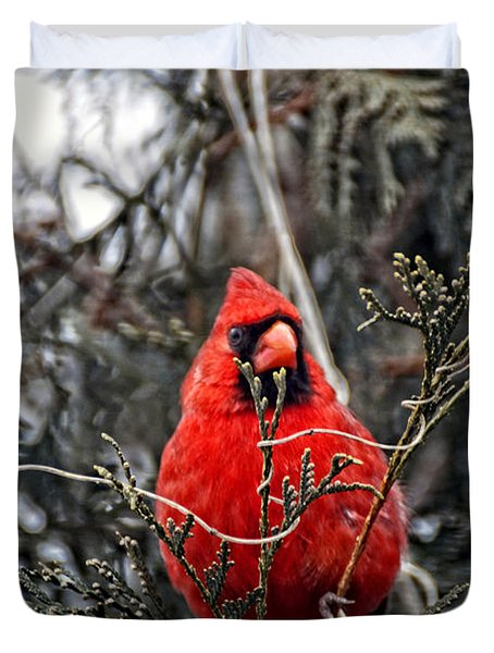 Winter Cardinal 03 Duvet Cover by Thomas Woolworth
