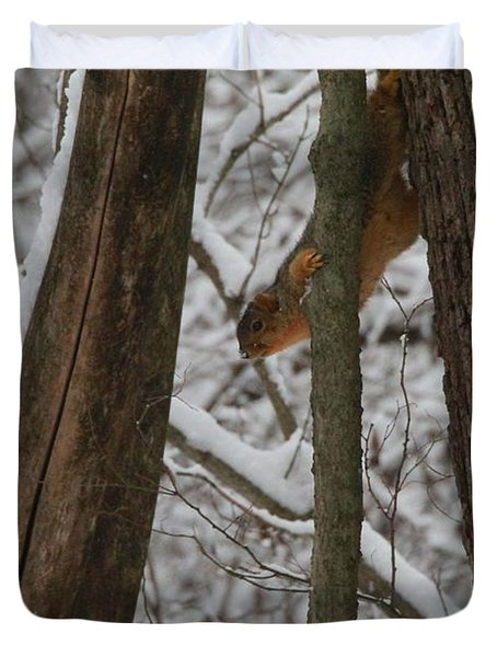 Winter Squirrel Duvet Cover by Dan Sproul