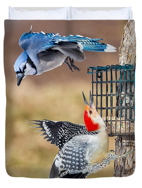Woodpeckers And Blue Jays Square Duvet Cover by Bill Wakeley