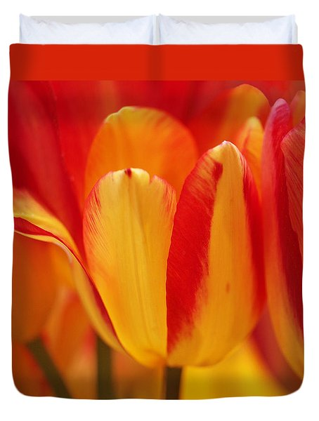 Yellow And Red Striped Tulips Duvet Cover by Rona Black