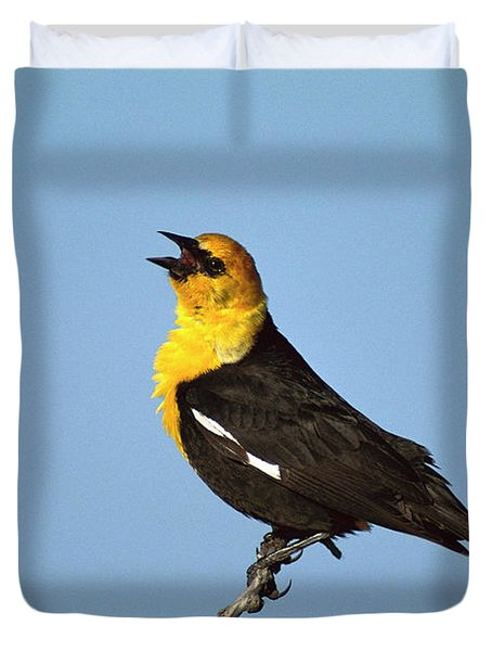 Yellow-headed Blackbird Singing Duvet Cover by Tom Vezo