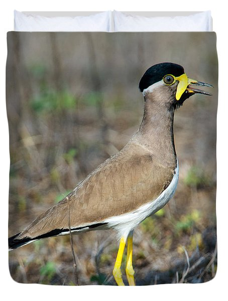 Yellow-wattled Lapwing Vanellus Duvet Cover by Panoramic Images
