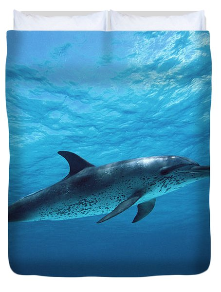 Atlantic Spotted Dolphin Stenella Duvet Cover by Todd Pusser