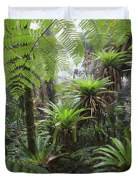 Bromeliad Bromeliaceae And Tree Fern Duvet Cover by Cyril Ruoso