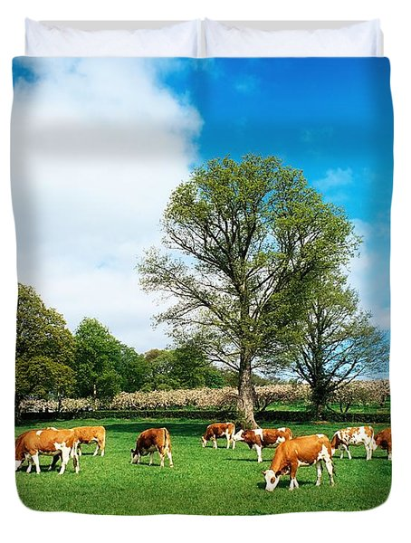Hereford Bullocks Duvet Cover by The Irish Image Collection