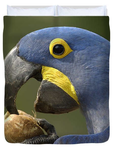 Hyacinth Macaw Anodorhynchus Duvet Cover by Pete Oxford