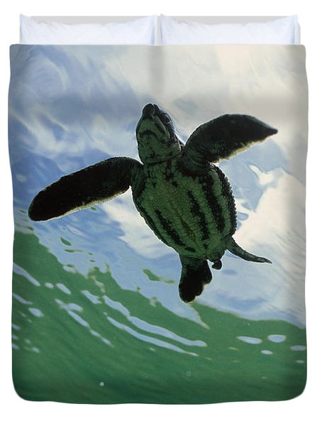 Leatherback Sea Turtle Dermochelys Duvet Cover by Mike Parry