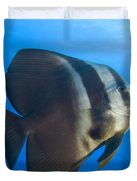 Longfin Spadefish, Papua New Guinea Duvet Cover by Steve Jones