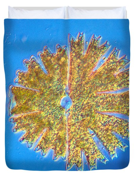 Micrasterias Duvet Cover by Michael Abbey and Photo Researchers