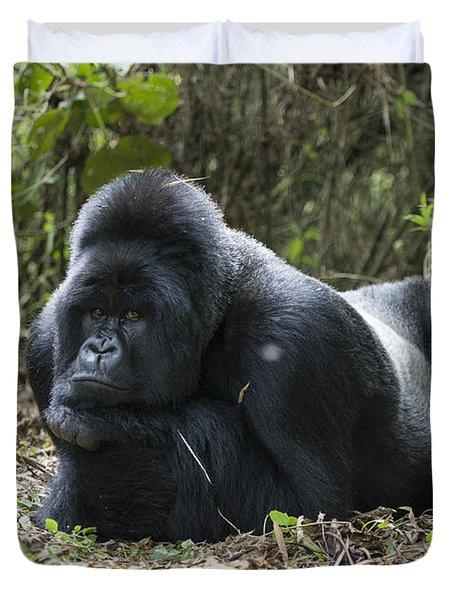 Mountain Gorilla Silverback Resting Duvet Cover by Suzi Eszterhas