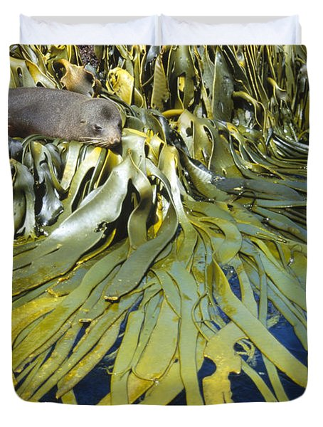 New Zealand Fur Seal Arctocephalus Duvet Cover by Tui De Roy