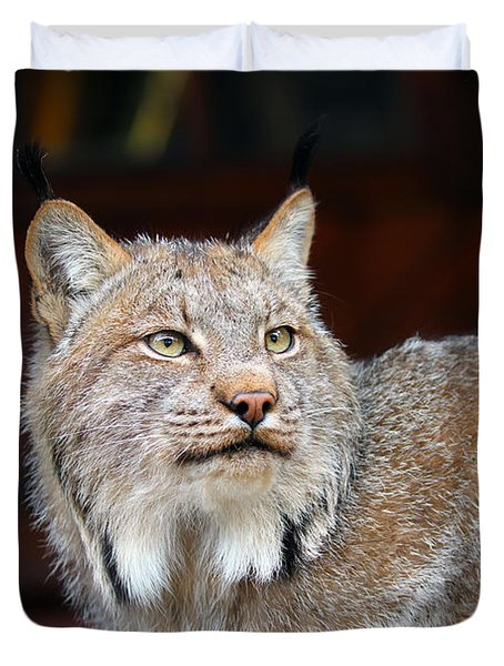 North American Lynx Duvet Cover by Paul Fell