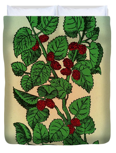 Red Mulberry Duvet Cover by Science Source