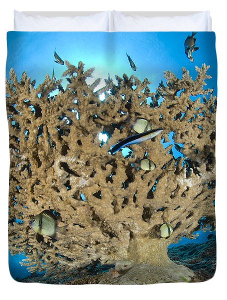 Reticulate Humbugs Gather Under Stone Duvet Cover by Steve Jones