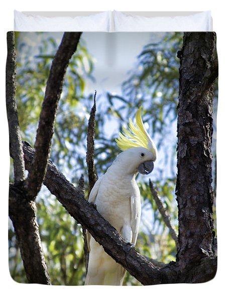 Sulphur Crested Cockatoo Duvet Cover by Douglas Barnard