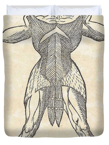 Historical Anatomical Illustration Duvet Cover by Science Source